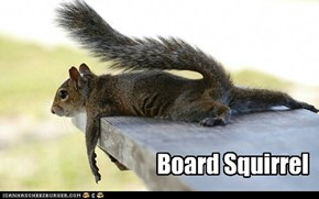 Board Squirrel is really Bored