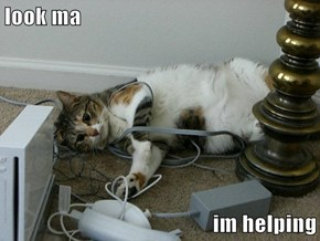 Helpful Cat is...Tangled