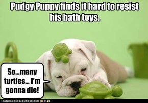 Pudgy Puppy finds it hard to resist his bath toys.