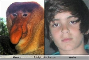 Macaco Totally Looks Like Andre