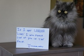 Colonel Meow Doesn't Mess Around