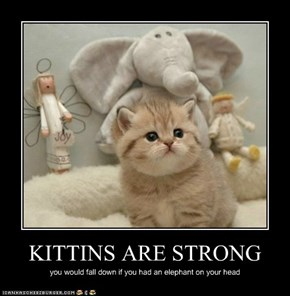 KITTINS ARE STRONG