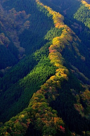 Handsome Maple Ridges in Japan