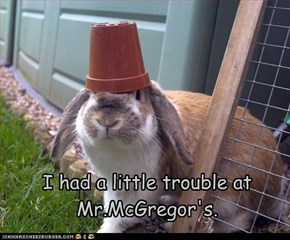 I had a little trouble at Mr.McGregor's.