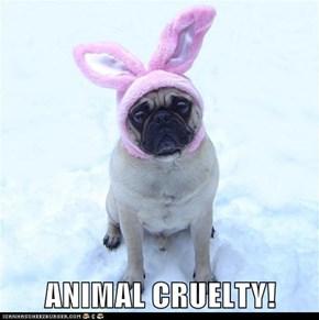 ANIMAL CRUELTY!