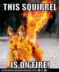 THIS SQUIRREL  IS ON FIRE!