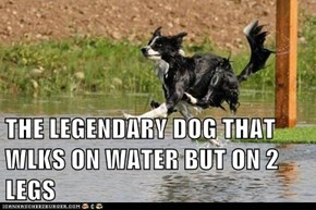 THE LEGENDARY DOG THAT WLKS ON WATER BUT ON 2 LEGS