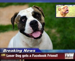 Breaking News - Loser Dog gets a Facebook Friend!