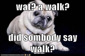 wat? a walk?  did sombody say walk?