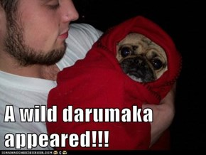 A wild darumaka appeared!!!