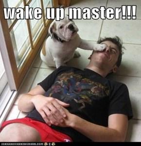 wake up master!!!