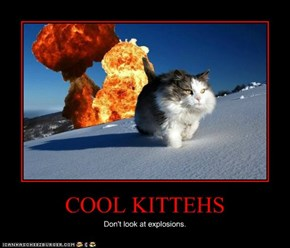 COOL KITTEHS