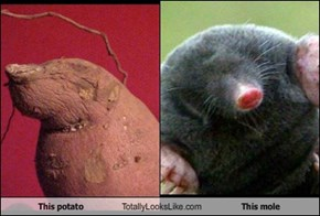 This potato Totally Looks Like This mole