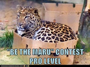 """BE THE MARU"" CONTEST      PRO LEVEL"
