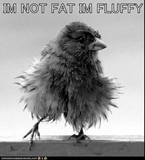 IM NOT FAT IM FLUFFY
