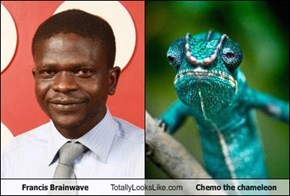 Francis Brainwave Totally Looks Like Chemo the chameleon