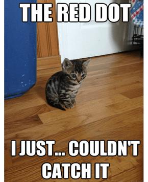 Flashback Kitten