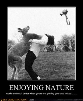 Stupid Human....