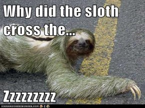 Why did the sloth cross the...  Zzzzzzzzz