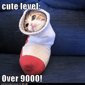 cute level:  Over 9000!