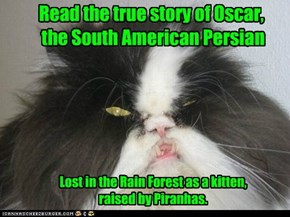 Read the true story of Oscar,  the South American Persian