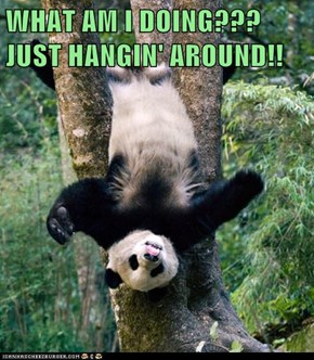 WHAT AM I DOING??? JUST HANGIN' AROUND!!