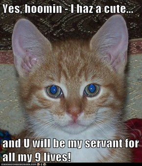 Yes, hoomin - I haz a cute...  and U will be my servant for all my 9 lives!