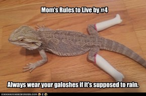 Mom's Rules to Live by #4