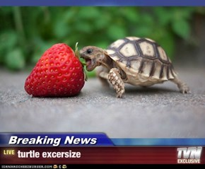 Breaking News - turtle excersize