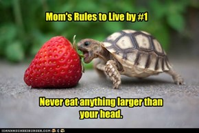 Mom's Rules to Live by #1