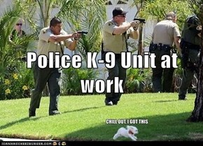 Police K-9 Unit at work