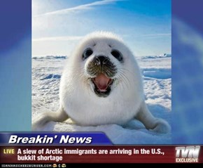 Breakin' News - A slew of Arctic immigrants are arriving in the U.S., bukkit shortage