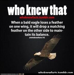 Who Knew That: Bald Eagle