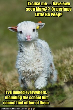 Why Does This Lamb Have an English Accent?