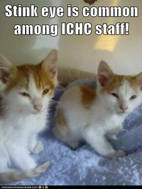 Stink eye is common among ICHC staff!