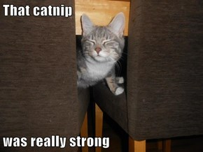That catnip  was really strong