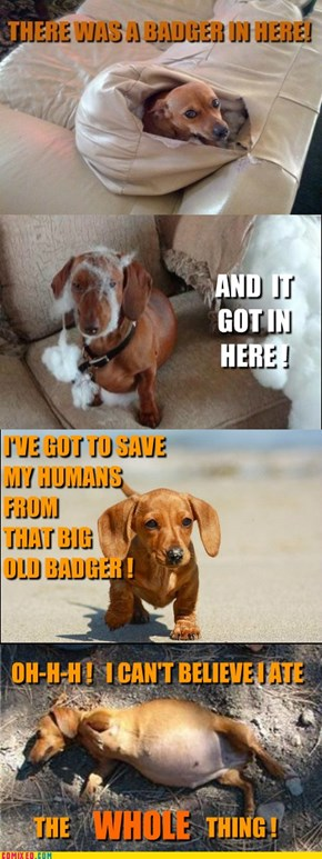 THE DOXIE & THE BADGER