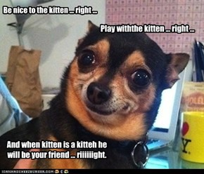 Be nice to the kitten ... right ...