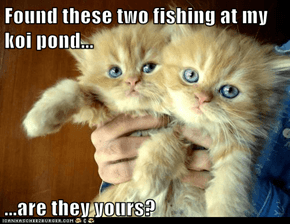 Found these two fishing at my koi pond...  ...are they yours?