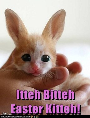 Itteh Bitteh                   Easter Kitteh!