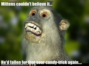 Mittens couldn't believe it...  He'd fallen for that sour candy-trick again....