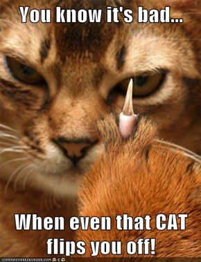You know it's bad...  When even that CAT flips you off!