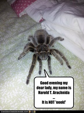 Good evening my dear lady, my name is Harold T. Arachnida ... It is NOT 'eeek!'