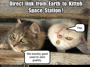 Direct  link  from  Earth  to  Kitteh  Space  Station !