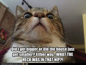 Did I get bigger or did the house just get smaller? Either way...WHAT THE HECK WAS IN THAT NIP?!