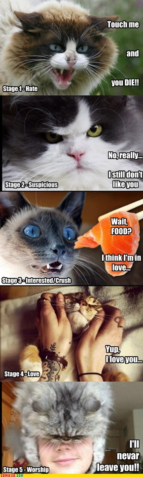 Stages of Love - Cats