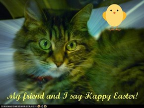 Best wishes from Prudence and cataff