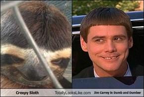 Creepy Sloth Totally Looks Like Jim Carrey in Dumb and Dumber