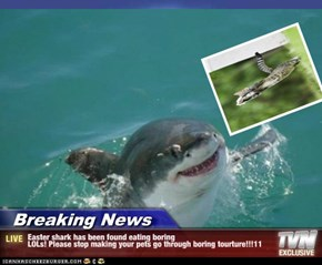 Breaking News - Easter shark has been found eating boring LOLs! Please stop making your pets go through boring tourture!!!11