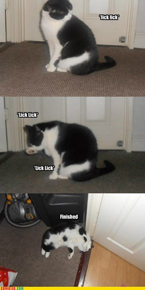 The life and times of Lucy the Cat!